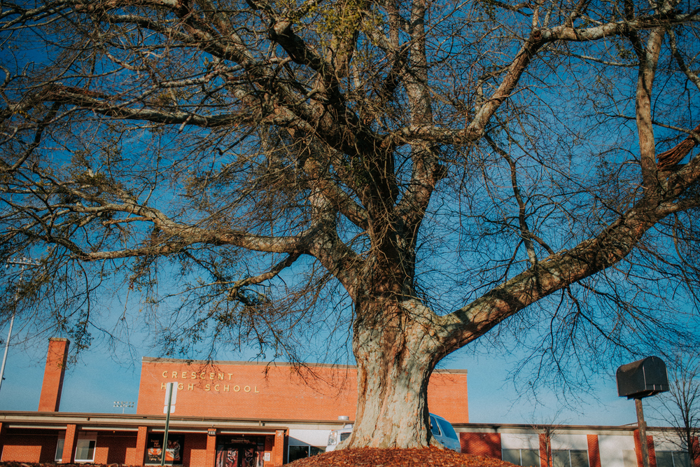 Crescent Says Goodbye to 60-year-old Student Memorial Tree