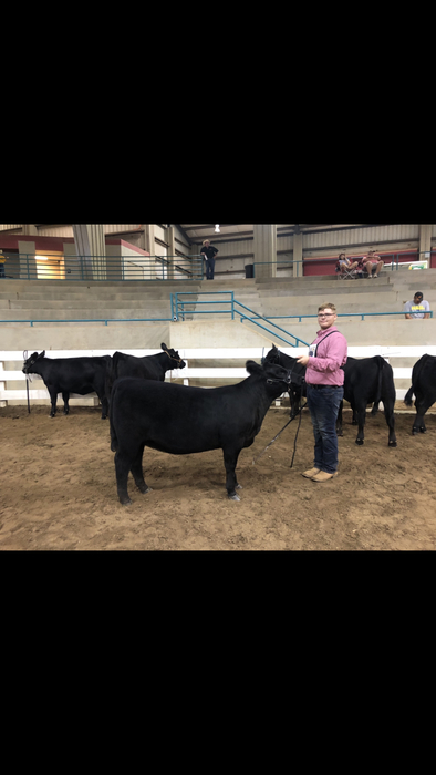 Nick Bowman with his Angus heifer.