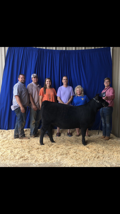 Nick Bowman, Reserve Grand Champion Angus and Fifth Overall Female.