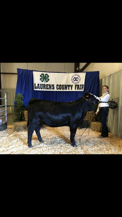 Michaela Herring: Champion Senior Showman