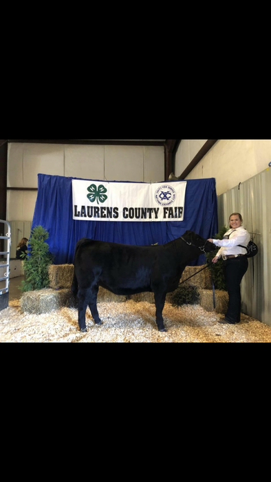 Emily Wilson: Reserve Grand Champion Continental Show