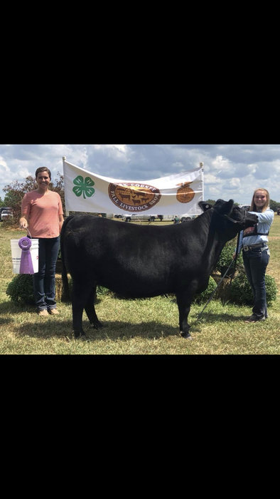 Hannah Wooten: York County Fall Livestock Show, Reserve Grand Champion Crossbred