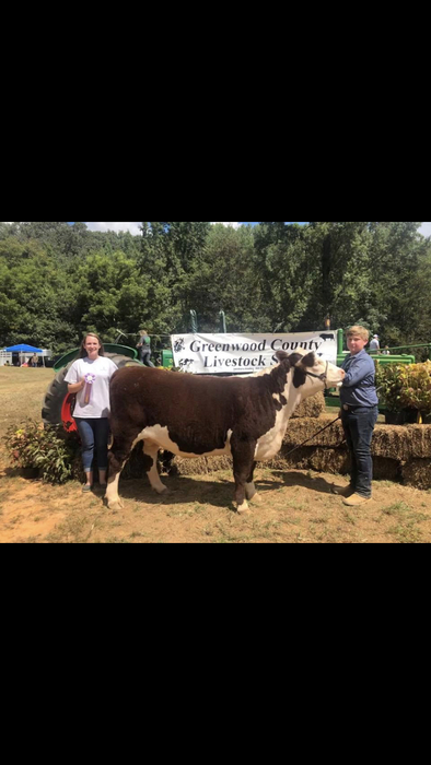 Brent Erwin: Greenwood County Livestock Show, Reserve Grand Champion Hereford