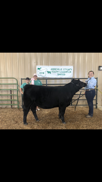 Emily Wilson with her Reserve Grand Champion Simmental