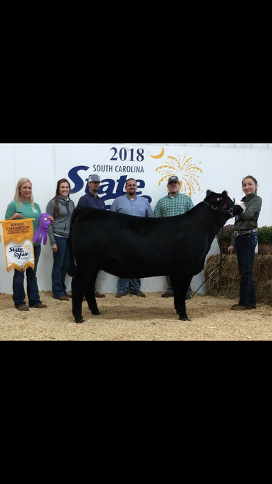 Michaela Herring: Grand Champion Simmental