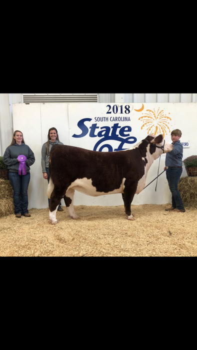 Brent Erwin: Grand Champion Spring Yearling Division