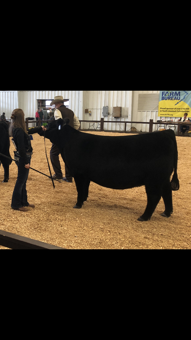 Hannah Wooten: Grand Champion Senior Division Crossbred